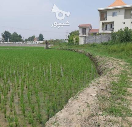 فروش زمین مسکونی در متراژهای از 200 متر   در گروه خرید و فروش املاک در مازندران در شیپور-عکس4