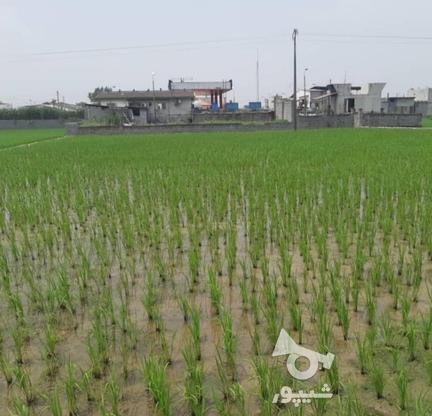 فروش زمین مسکونی در متراژهای از 200 متر   در گروه خرید و فروش املاک در مازندران در شیپور-عکس5