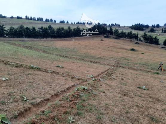 زمین 1700 متری کلاردشت در گروه خرید و فروش املاک در مازندران در شیپور-عکس1