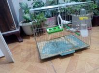 فنج مولد با قفس و وسایل در شیپور-عکس کوچک