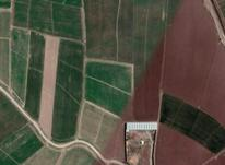 زمین کشاورزی 1 هکتاری گیلانده در شیپور-عکس کوچک