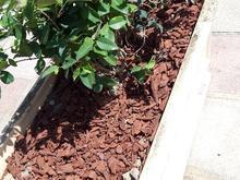 باغبانی و احداث در شیپور