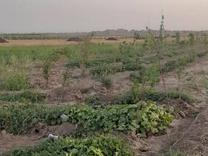 فروش زمین 700 متر در محمدیه در شیپور