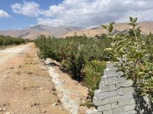 فروش زمین کشاورزی 3000 متر در جابان جاده سرخده در شیپور