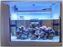 چراغ تخصصی آکواریوم آب شور 72 ال ای دی مدل UV+ در شیپور