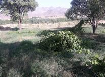 بویین زهرا روستای رستم آباد زمین باغی در شیپور-عکس کوچک