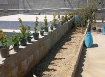 باغبانی هرسکاری در شیپور-عکس کوچک