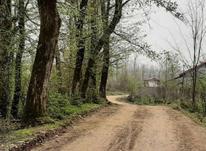 360 متر زمین مسکونی در روستای خرارود سیاهکل در شیپور-عکس کوچک