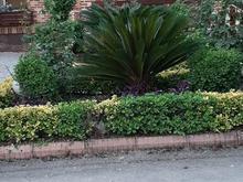 خدمات فضای سبز کالج در شیپور