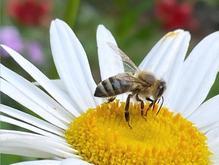 دوره آموزشی پرورش زنبور عسل و زنبورداری در شیپور