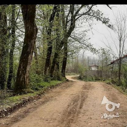 360 متر زمین مسکونی در پنابندان سیاهکل در گروه خرید و فروش املاک در گیلان در شیپور-عکس2