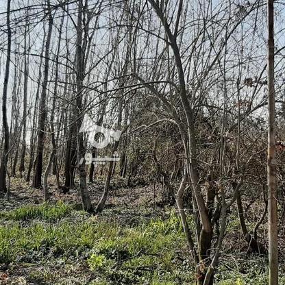 360 متر زمین مسکونی در پنابندان سیاهکل در گروه خرید و فروش املاک در گیلان در شیپور-عکس3