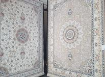 عرضه انواع فرش در شیپور-عکس کوچک