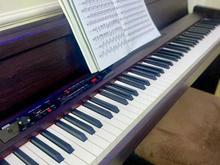 پیانو کرگ ژاپنی در شیپور