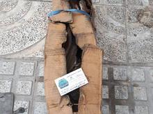 میل لنگ آونجر تالبوت انگلیس در شیپور