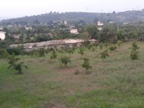 فروش زمین چسبیده به بافت 1400 متر در قادی کلا در شیپور
