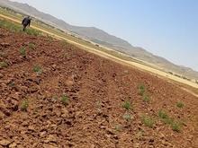 زمین زراعی برای درست کردن باغ2000 متر در شیپور