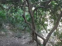 فروش زمین 670 متر در پاکدشت در شیپور