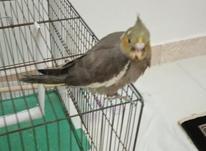پرنده سالم و باهوش در شیپور-عکس کوچک