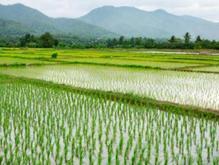 فروش زمین کشاورزی 2910 متر در لشت نشا در شیپور