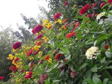 باغ ویلایی کوچه گلخانه در شیپور