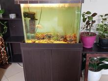 فروش آکواریوم با تمام لوازم و ماهی در شیپور