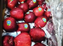 مقدار 30 تن سیب درختی قرمز در شیپور-عکس کوچک