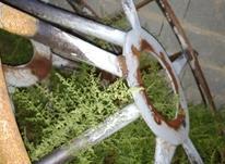 چرخ اهنی فرگوستون با توپیش سالم در شیپور-عکس کوچک