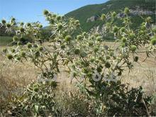 گیاهان دارویی در شیپور