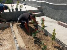 باغبانی درختکاری سم پاشی در شیپور