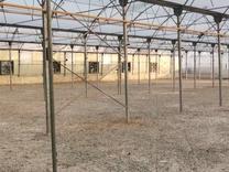فروش گلخانه 5000 متر در ملارد.صفادشت در شیپور