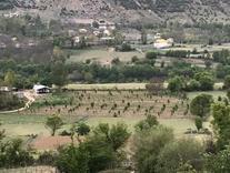 فروش زمین کشاورزی 4000000 متر در نوشهر در شیپور