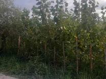 فروش زمین کشاورزی 30000 متر در صومعه سرا در شیپور