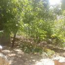 فروش باغ وزمین 5000 متر