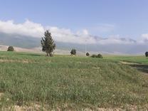 زمین کشاورزی 42000 متری در شیپور