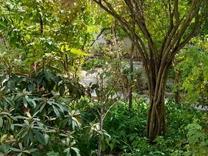 فروش زمین اداری و تجاری 2800 متر در ونک در شیپور
