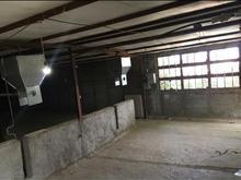 فروش دامداری و کشاورزی 1000 متر در ساوجبلاغ در شیپور