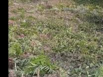 فروش یا معاوضه زمین ییلاقی 370 متر مربع در شیپور