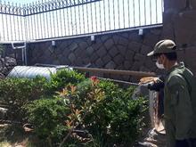 هرس و باغبانی در شیپور