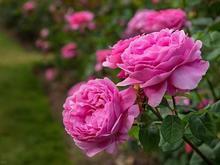 انجام کلیه امور باغ و باغچه و فضای سبز در شیپور