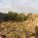 5000هزار متر باغ
