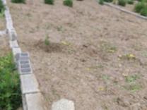 باغچه دنج و آرام درجاده کیاکلا 161 متری در شیپور
