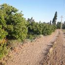 باغ و زمین با آب سنددار منطقه گردشگری ابر شاهرود