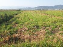 زمین کشاورزی 2207متری. در شیپور