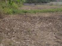 فروش زمین کشاورزی 240 متر در آستانه اشرفیه در شیپور