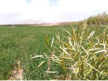 فروش باغ و زمین کشاورزی به متراژ 5000 متر مربع در شیپور
