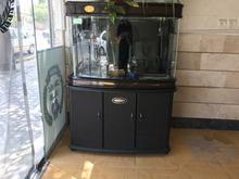 آکواریوم شیشه خم و کمد دار چینی در شیپور