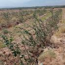 4500 متر باغ سنجد 2:10آب