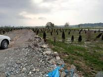 فروش زمین مسکونی 220 متر در جاده چمستان در شیپور