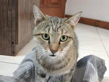 گربه گم شه در شیپور